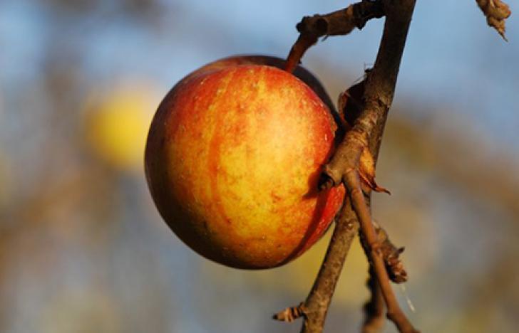 Attac gewinnt in Frankreich Prozess gegen Apple